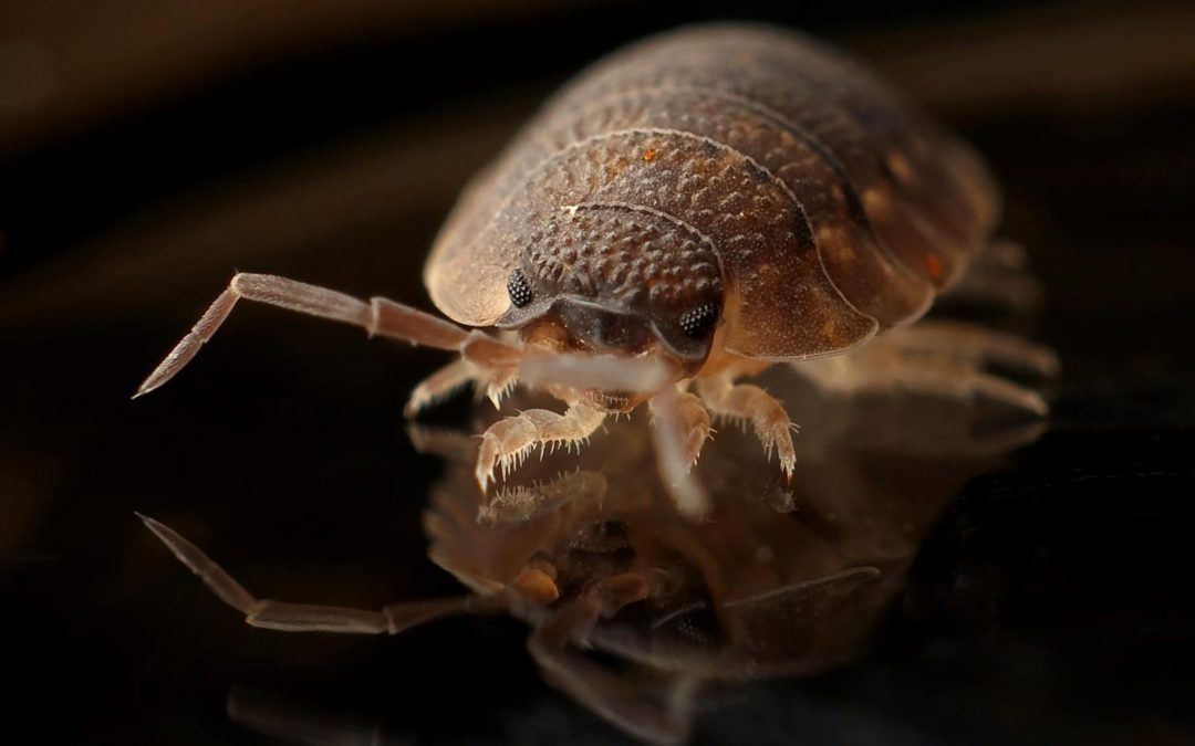 Can Bed Bugs Spread to Other Rental Units?